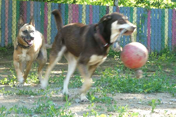Vermont dog daycare and boarding